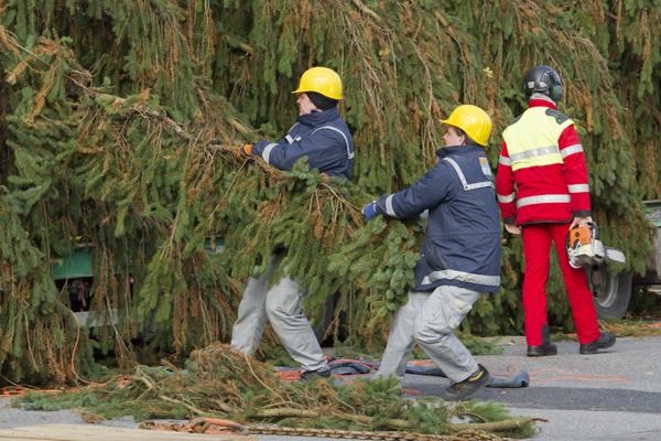 Wann Weihnachtsbaum Aufstellen.Reportage Weihnachtsbaum Aufstellen Am Rathausplatz
